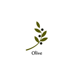 isolated green olive branch logo olive oil vector image