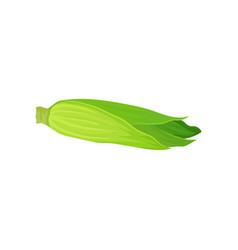 ripe corn cob with leaves fresh organic vegetable vector image