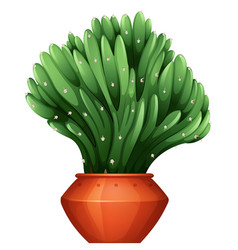 beautiful shape of cactus in claypot vector image