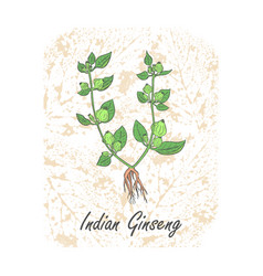 Colored herbal indian ginseng on substrate vector