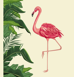 Flamingo exotic tropical bird with leaf plam vector