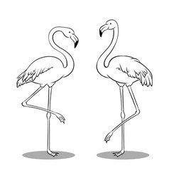 pink flamingo bird coloring book vector image