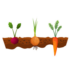 vegetables growing in ground one line onion vector image