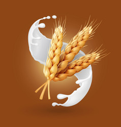 wheat and milk splash barley cereals in yogurt vector image