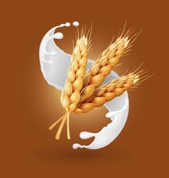 wheat and milk splash barley cereals in yogurt vector image