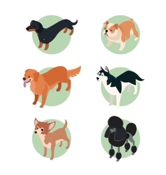 collection isometric dogs2 vector image