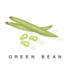 Green bean pod infographic with vector