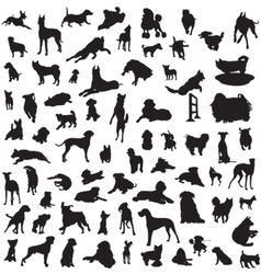 set different breeds dogs on a white background vector image