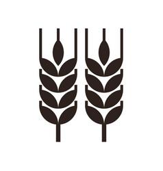 wheat ear icon vector image