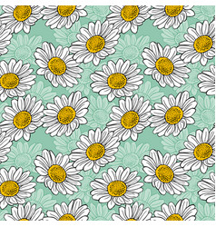blossoming white daisies on a light green vector image