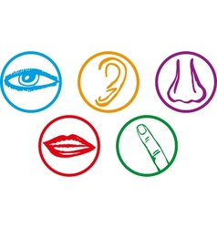Five senses icon set vector