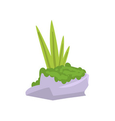 rock gray granite stone with moss and green grass vector image