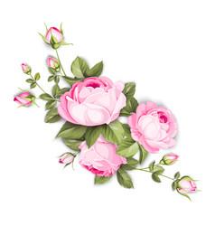 Blooming rose vector