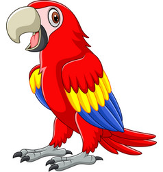 cartoon funny macaw vector image