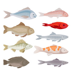 flat set of different kinds of fish vector image