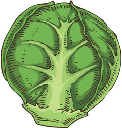 Fresh whole brussels sprout vector