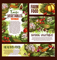 natural vegetables food sketch posters vector image