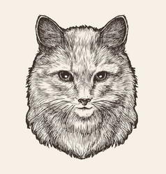 portrait of cute furry cat or kitty sketch drawn vector image