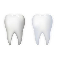 Tooth Poster Stomatology Realistic 3d Isolated vector image vector image