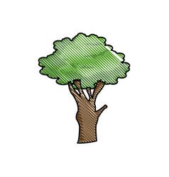 drawing tree foliage natural ecological image vector image vector image