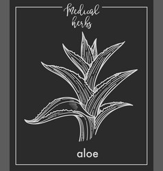 Aloe medical herb sketch botanical design icon vector