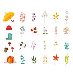 autumn plants and clothes accessories set with vector image