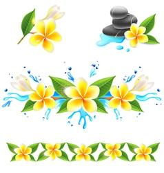 frangipani set vector image
