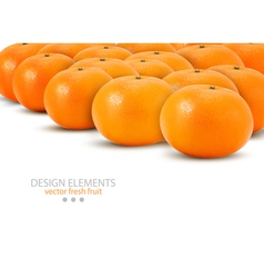 Mandarin isolated on white background vector
