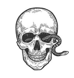 Snake in human skull vector