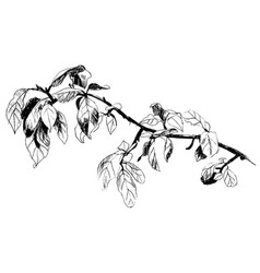 tree branch leaves vector image