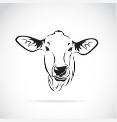 Cow head on white background calf vector