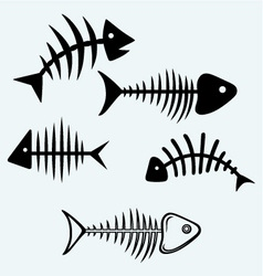 Fish bone vector image vector image