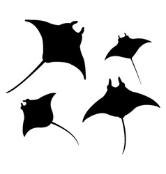 manta on white background vector image