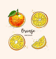orange fruit drawing orange slices watercolor vector image
