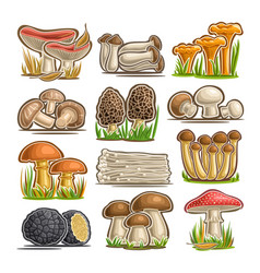 Set of eatable mushrooms vector