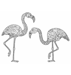 Two flamingos coloring for adults vector