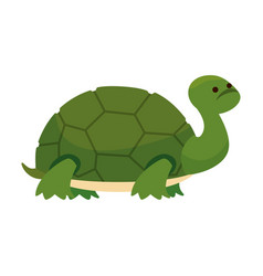 cute turtle wild character vector image