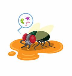 Flies land on food scraps on floor with bacter vector