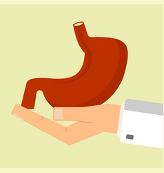 doctor hand holding human stomach healthcare vector image