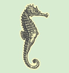 Hand drawn sea horse vector
