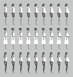 Pregnancy stages vector image