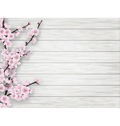 Spring cherry pink flower on white old wood vector