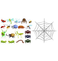 different types of bugs and spiderweb vector image vector image