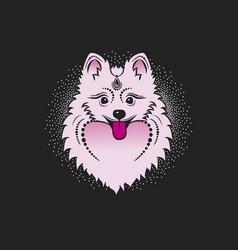 Image of a dog pomeranian dog head vector