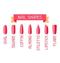Acrylic nail shapes set vector