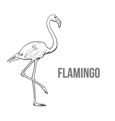 Hand drawn pink flamingo colorful sketch style vector image