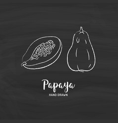 papaya fruit drawing papaya pawpaw slice and vector image