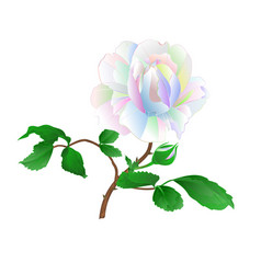 rose stem and leaves multicolored vector image
