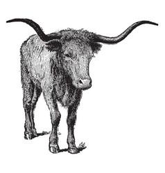 Texas longhorn vintage vector