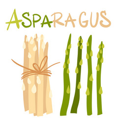 Vegetables asparagus green sprouts package of vector